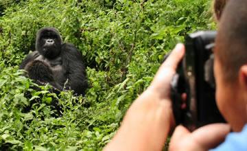 gorillas trekking in Africa