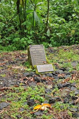 Dain Fossey tomb